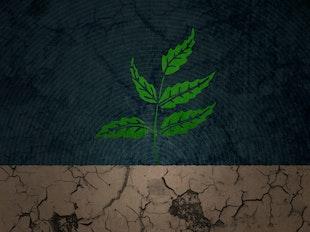 Doctrine of Regeneration  icon