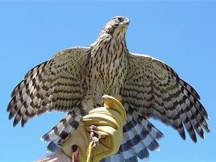 Falconry icon