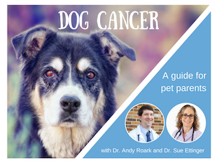 Dog Cancer - Now What? icon
