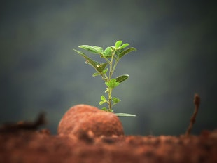 Theology of Church Planting icon